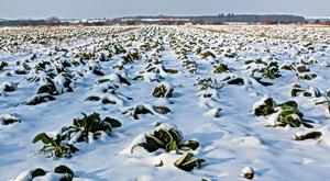 Zima, mráz, poèasí, zasnìžené pole